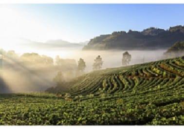 Teesaplantage02tBozONsRSs0